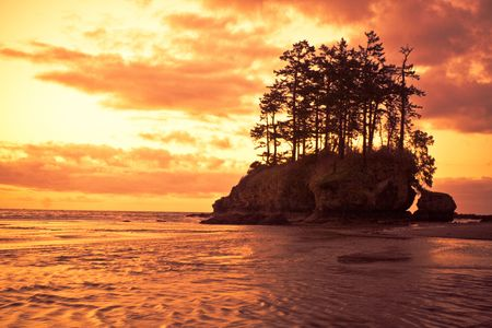 Beautiful dramatic sunset with trees and sea stacks along the Pacific coast