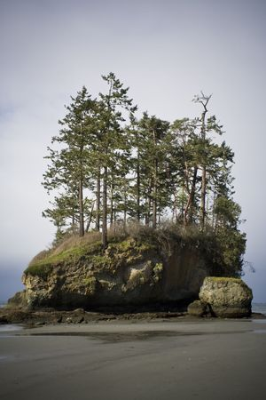 cloud drift: Wild Pacific beach landscape on a stormy day with trees growing on a sea stack