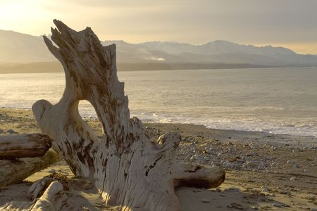 wild beach landscape with driftwood in Washington Stock Photo - 2726575