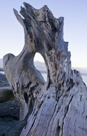 strait of juan de fuca: wild beach landscape with driftwood in Washington Stock Photo