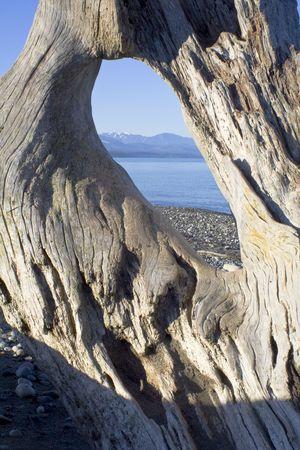 wild beach landscape with driftwood in Washington Stock Photo - 2726731