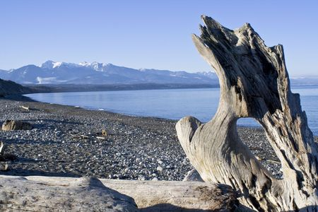 wild beach landscape with driftwood in Washington Stock Photo - 2726730