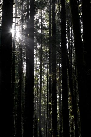 cathartic: Beautiful sunbeams filtering through the trees in Juan de Fuca Provincial Park, British Columbia, Canada Stock Photo