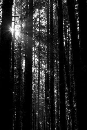 Beautiful sunbeams filtering through the trees in Juan de Fuca Provincial Park, British Columbia, Canada Stock Photo - 2726795