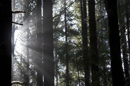美しい太陽光線の Juan de Fuca 州立公園、ブリティッシュ ・ コロンビア、カナダ、木 々の間のフィルタ リング