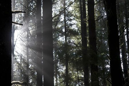 Beautiful sunbeams filtering through the trees in Juan de Fuca Provincial Park, British Columbia, Canada Stock Photo - 2726892
