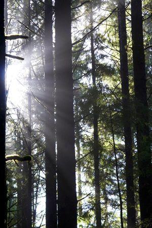 Beautiful sunbeams filtering through the trees in Juan de Fuca Provincial Park, British Columbia, Canada Stock Photo - 2727066
