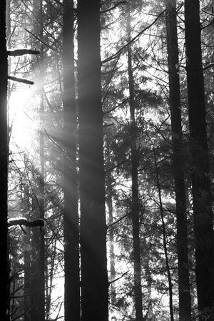Beautiful sunbeams filtering through the trees in Juan de Fuca Provincial Park, British Columbia, Canada Stock Photo - 2727052