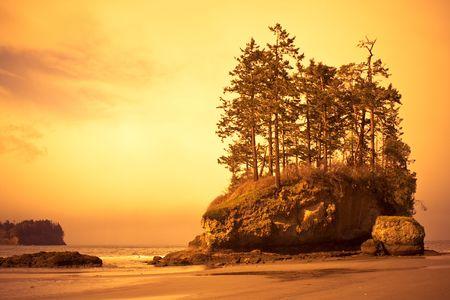 野生の太平洋ビーチ風景海スタックに生育する樹木と嵐の日に