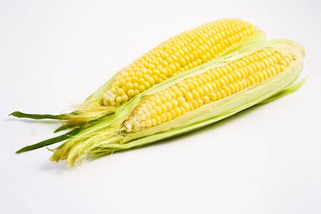 Fresh ears of corn on a clean white background photo