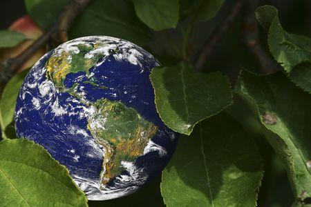 地球に囲まれ緑の葉 (この画像ではいくつかのグラフィック NASA によって提供され、http:visibleearth.nasa.gov と http:grin.hq.nasa.gov で発見することができます) 写真素材