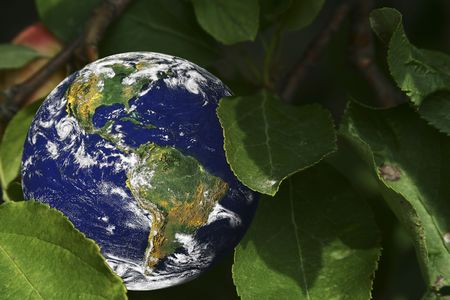 Earth nestled among green leaves (Some graphics in this image were provided by NASA and can be found at http:visibleearth.nasa.gov and http:grin.hq.nasa.gov)