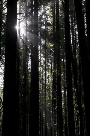 Beautiful sunbeams filtering through the trees in Juan de Fuca Provincial Park, British Columbia, Canada Stock Photo - 2985791