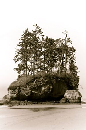 Wild Pacific beach landscape on a stormy day with trees growing on a sea stack