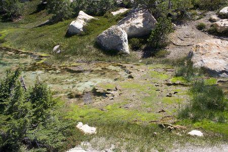 algas verdes: Algas verdes cerca de zonas hidrotermales en Lassen volc�nicas del Parque Nacional  Foto de archivo