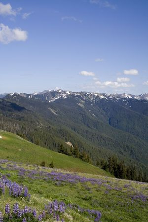 The Olympic Mountains on a summer day from Hurricane Ridge