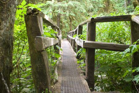 オリンピック国立公園内にログ歩道橋