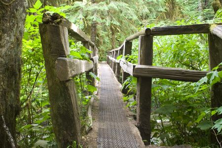 A log trail bridge in Olympic national Park