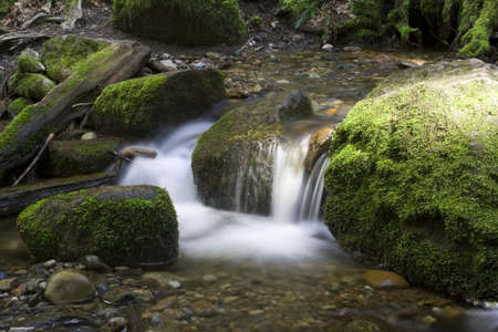 pacific northwest: A Pacific Northwest River in spring Stock Photo