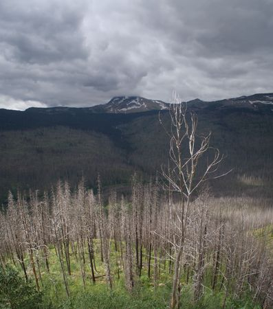 previously: A stormy sky over Glacier National Park.  This area was previously burned by forest fire.