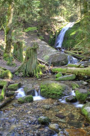 pacific northwest: Coal Creek Falls, a Pacific Northwest waterfall in spring