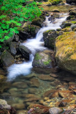 temperate: Bunch Creek Falls in the Quinault temperate rainforest area of Olympic National Park