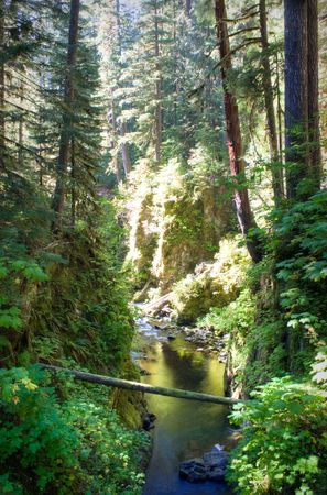 sol duc river: Sol Duc area of Olympic National Park Stock Photo