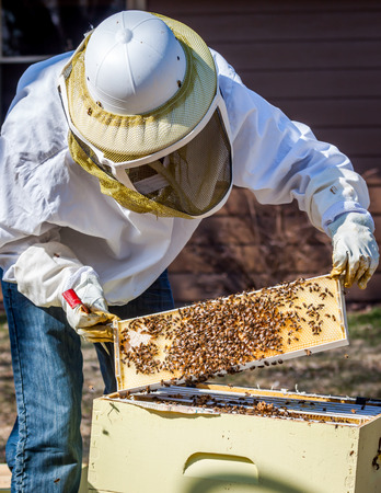 A beekeeper inspects a frame