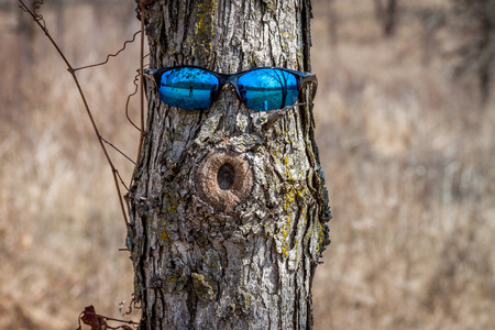 face in tree bark: A tree with a face and sunglasses