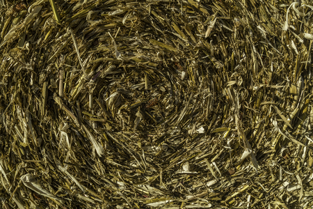 A close up of hay photo