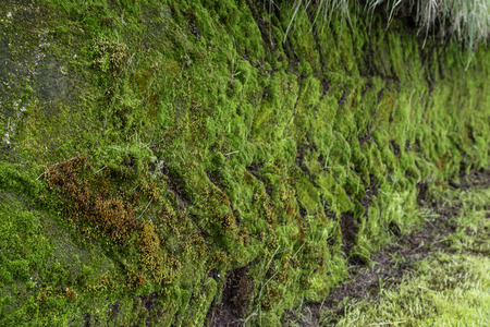 sod: Moss growing over sod bricks on a turf house in Iceland