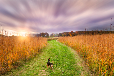 A dog watches the sun set on a fall evening.