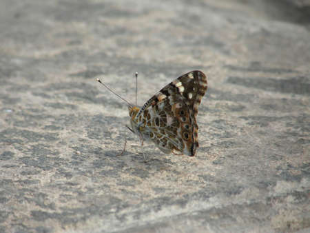 natur: Butterfly on concrete