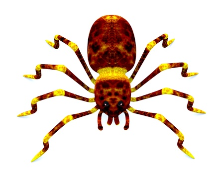 3d spider on the white background Stock Photo - 12742633