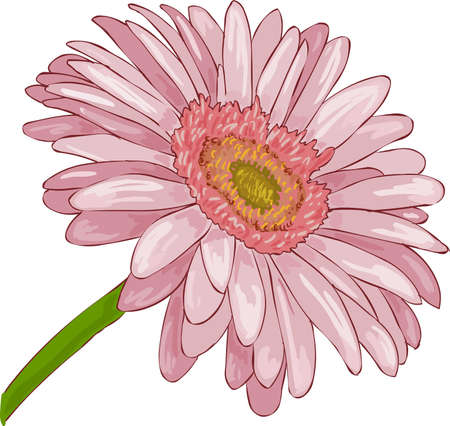 a beautiful pink flower Stock Vector - 11073476
