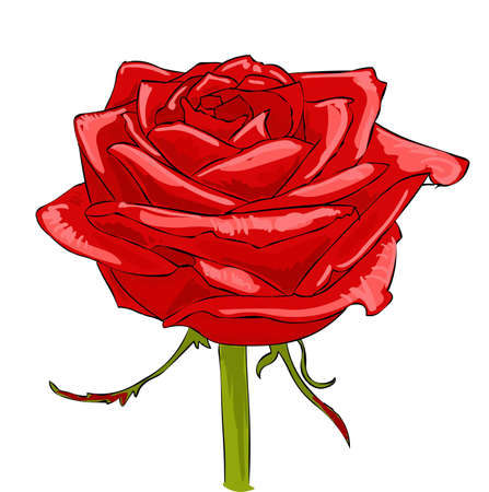 a red rose Stock Vector - 11073474