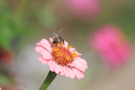 pink flower with a bee on it Stock Photo