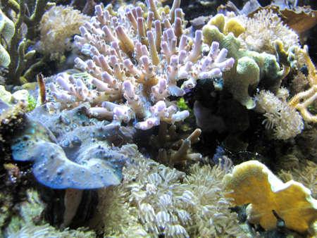 colorful corals Stock Photo