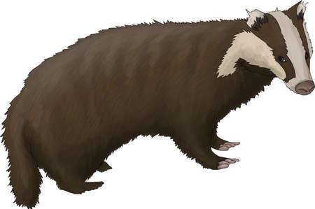 badger: badger