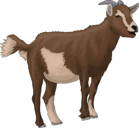 brown goat Stock Photo