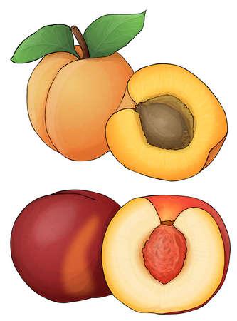 apricot kernels: orange fruit. Apricot and peach Stock Photo