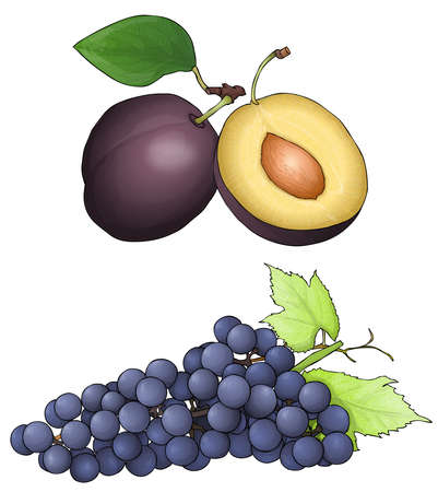 purple fruit. Plum and grapes