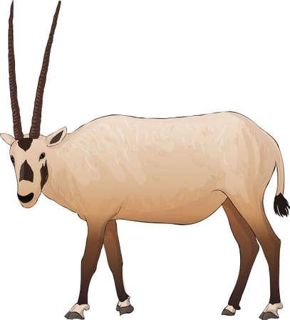 Arab antelope