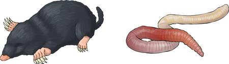 mole, worm