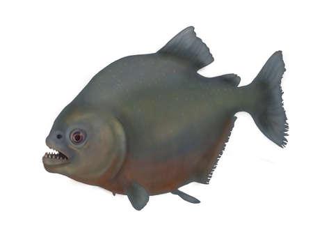 pygocentrus: piranha