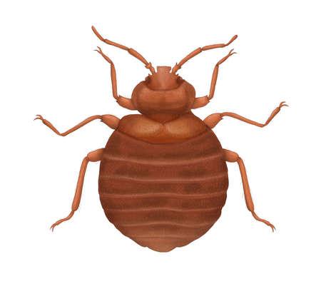 bedbug: bedbug