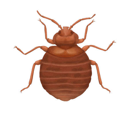 Cimicidae