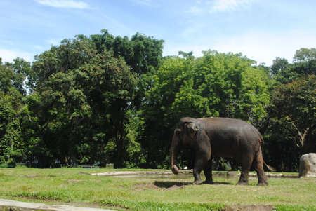 Énorme éléphant tropical