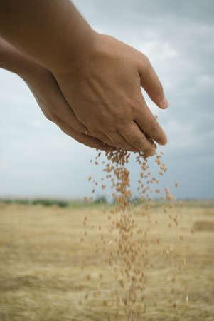 grain and hand photo