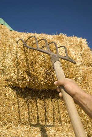 man carrying hay